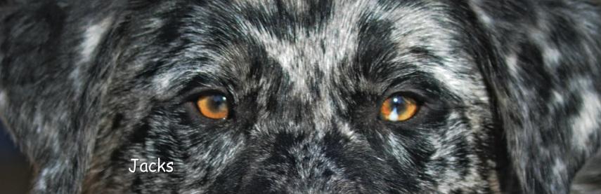 About WASR/ contact - Western Australian Shepherd Rescue
